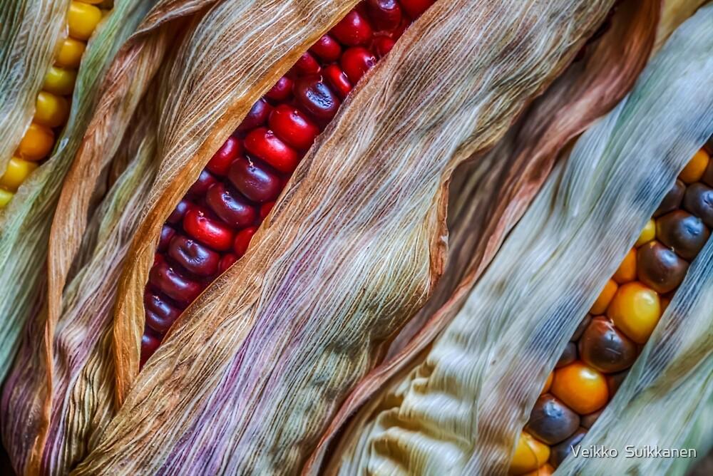 Colorful corn by Veikko  Suikkanen