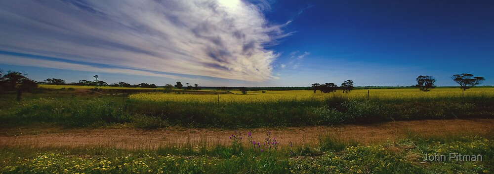 Canola Field by John Pitman