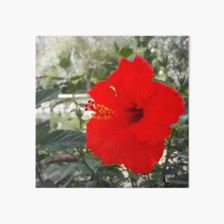 Red Gumamela Art Board Print
