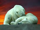 Polar Beauty by Veronica Schultz