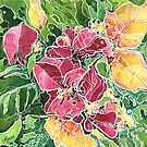 Bougainvillia by Carrie Alyson