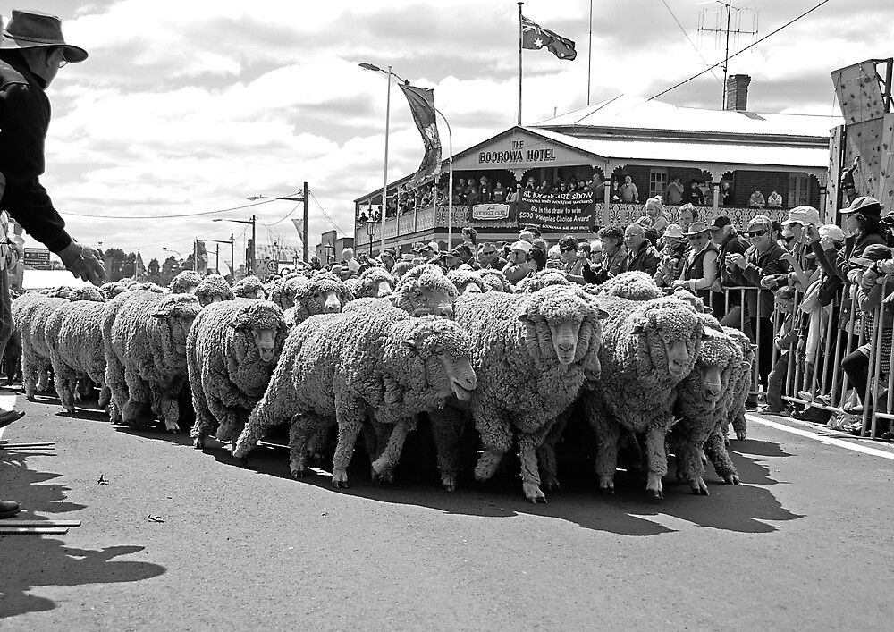 Running of the Sheep by GailD