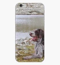german wirehaired pointer laying iPhone Case