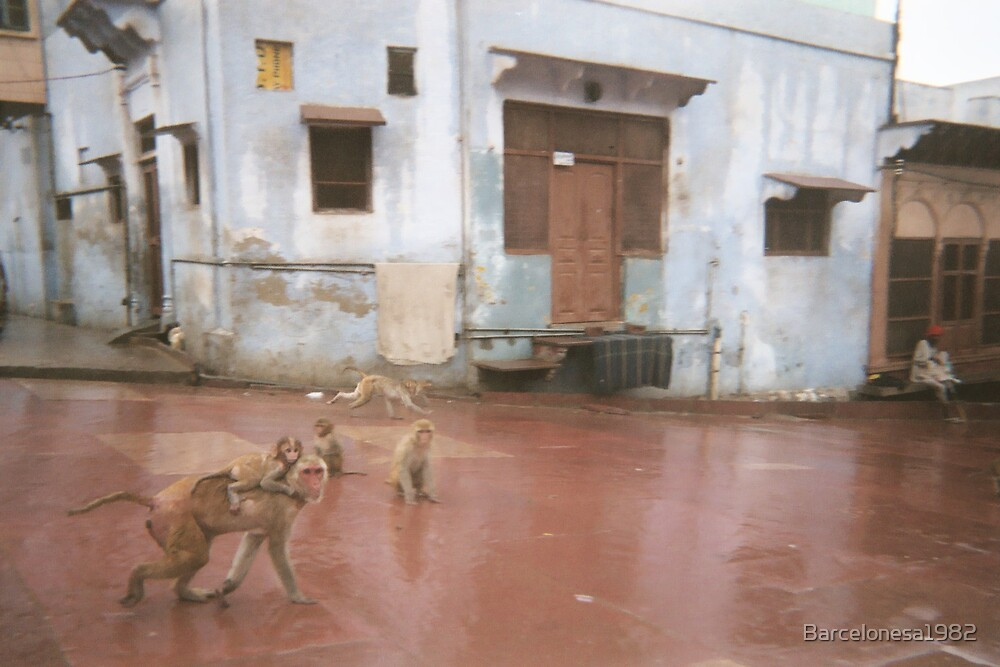 India, monkeys and monsoon by Barcelonesa1982