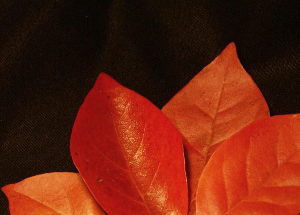 Leaves by David W Kirk
