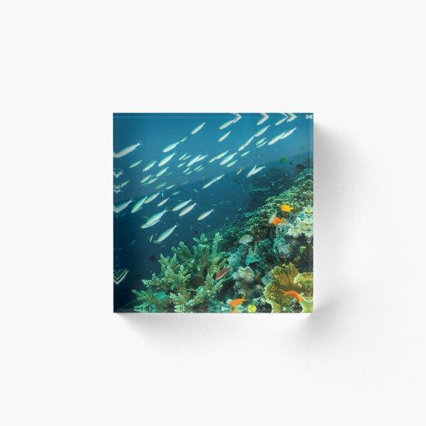 Life on the Reef Acrylic Block