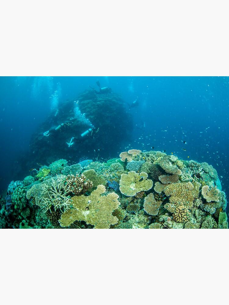 Reef explorers by DavidWachenfeld