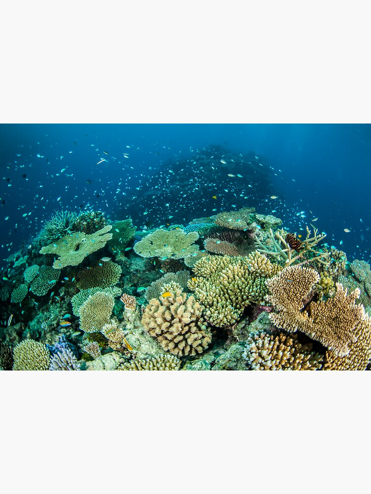 Coral reef- cradle of life by DavidWachenfeld