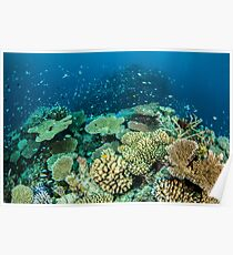 Coral reef- cradle of life Poster