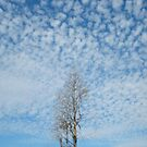 Cypress Under a Popcorn Sky by May Lattanzio