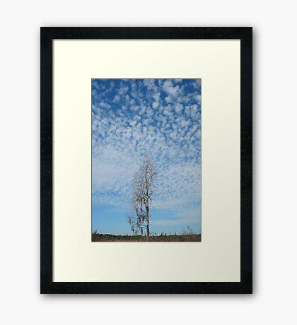 Cypress Under a Popcorn Sky Framed Print