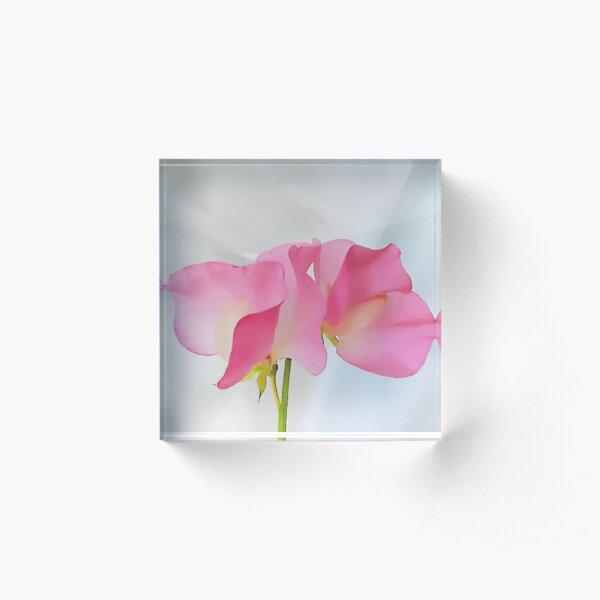 Sweetpea.  Acrylic Block