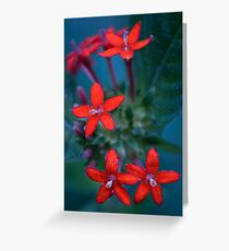 Colour Of Life XXX Greeting Card