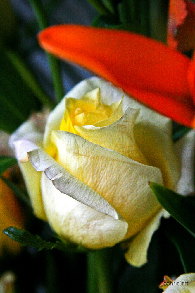 Yellow Rose by sshhoirtt