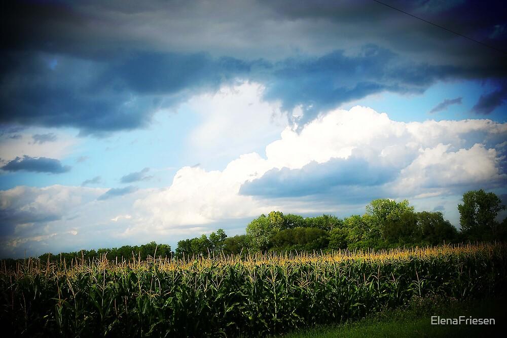 Corn & Clouds by ElenaFriesen