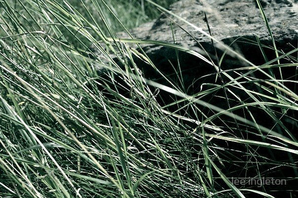 Grass over a rock by lee ingleton