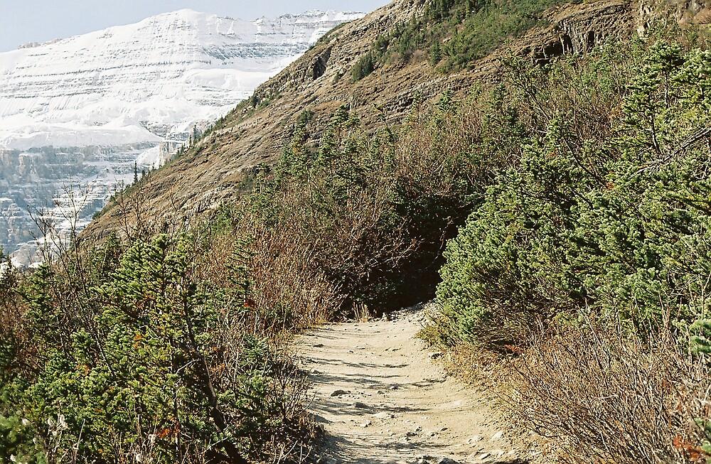 On the trail... by Steve Mezardjian