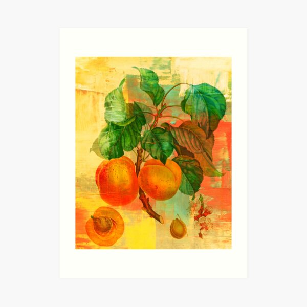 Botanical Print with a Modern Twist- Apricots- Peaches Art Print