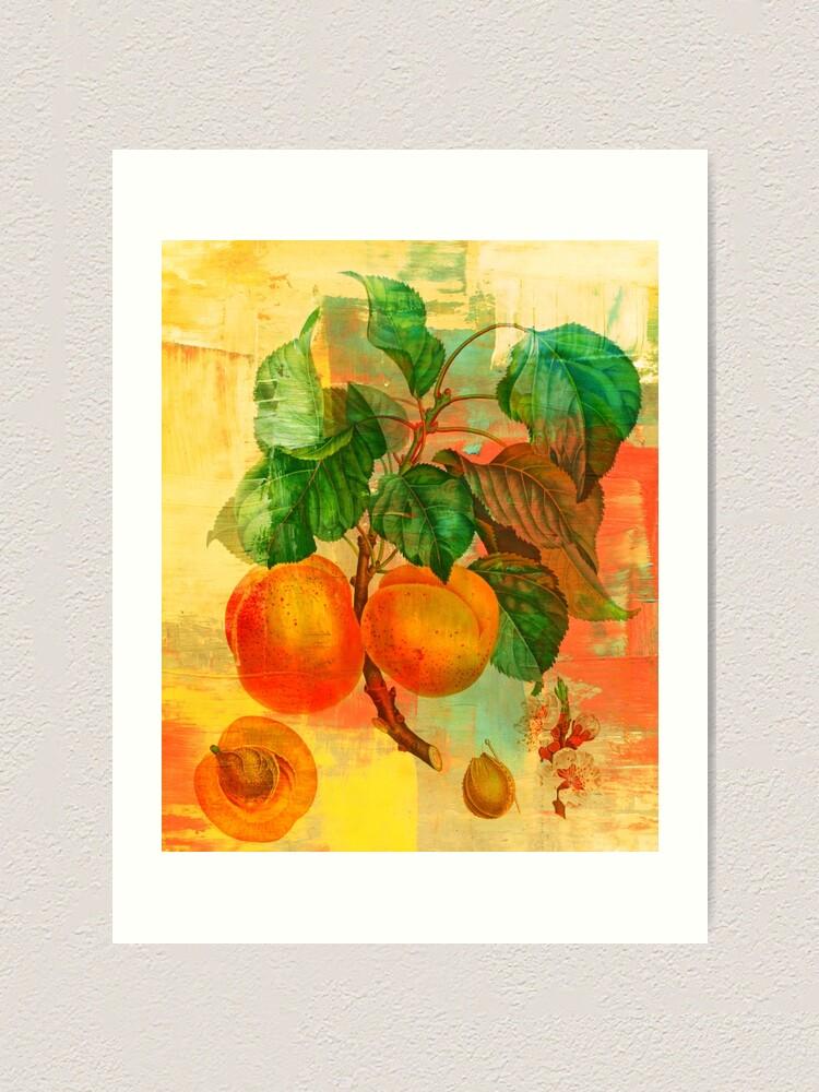 Alternate view of Botanical Print with a Modern Twist- Apricots- Peaches Art Print