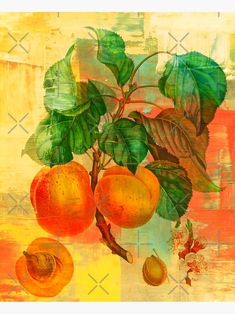 Botanical Print with a Modern Twist- Apricots- Peaches by Matlgirl