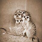 Meerkat Family by Hermien Pellissier