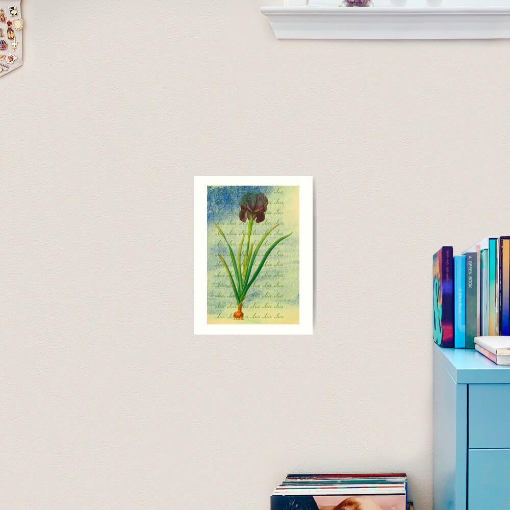 "Botanical Print-""Iris""  Art Print"