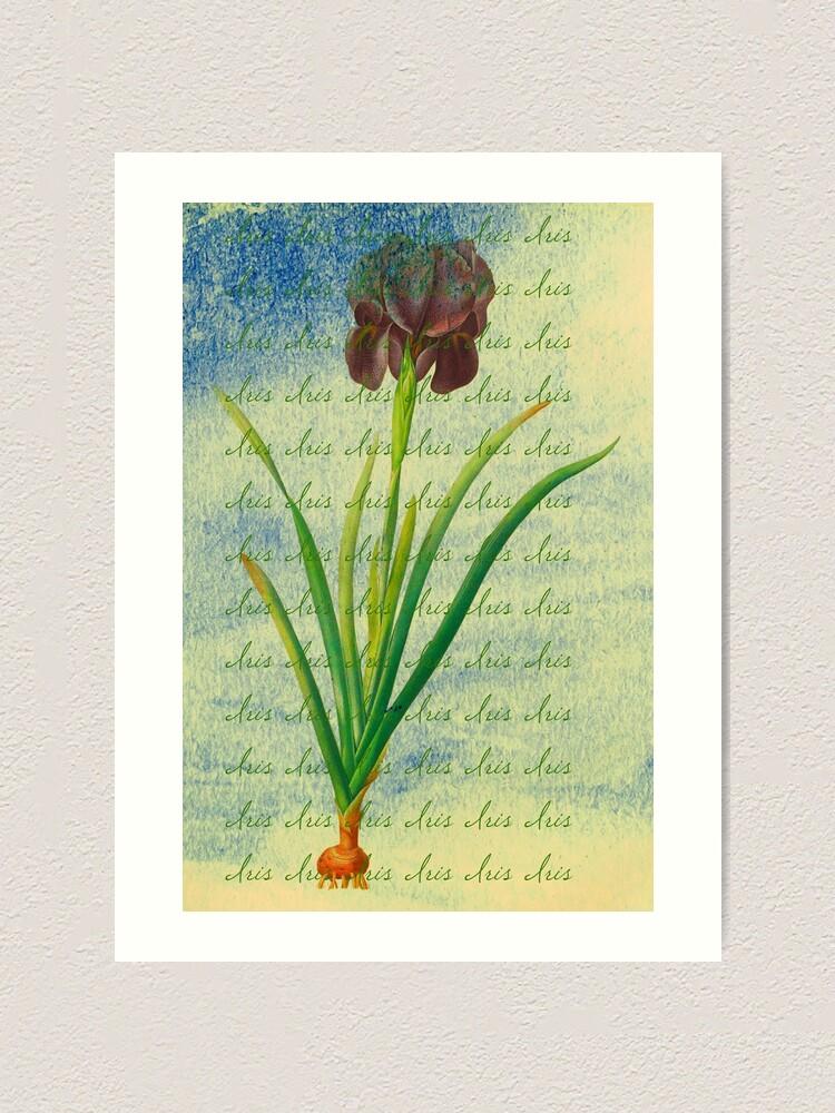 "Alternate view of Botanical Print-""Iris""  Art Print"
