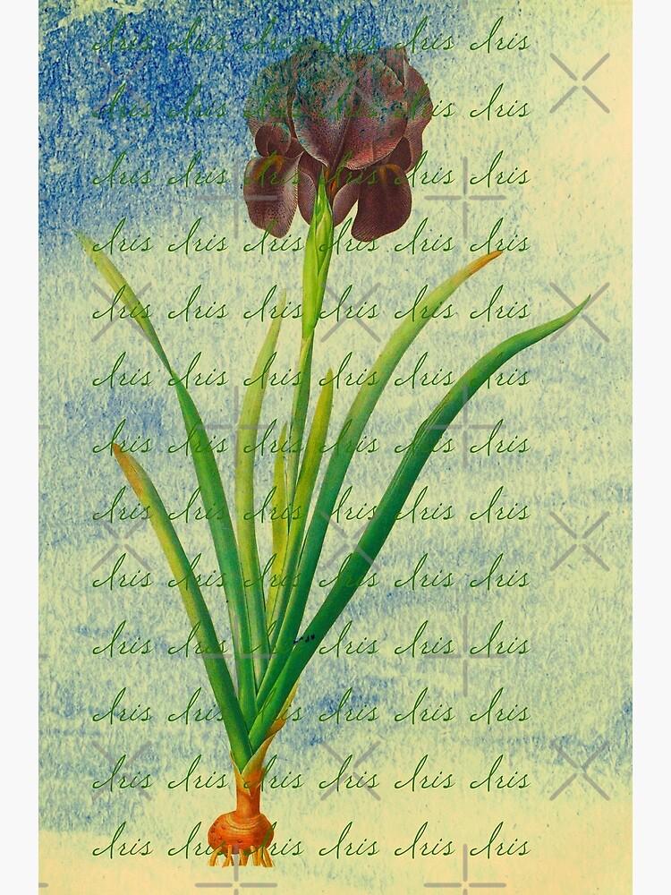 "Botanical Print-""Iris""  by Matlgirl"