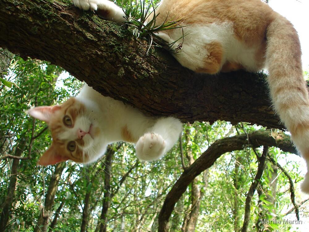 Tree cat by Marilia Martin