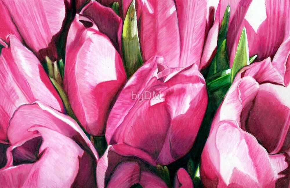 Pink Tulips  by DMxx