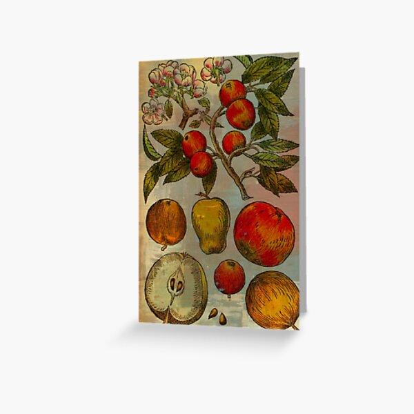 Botanical Print-Fruit Botanicals-Apples-Pears Greeting Card