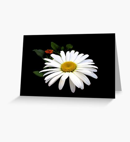 Daisy Love Greeting Card
