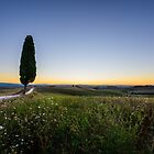 Lone tree before dawn, Val D'Orcia, Tuscany, Italy by Andrew Jones