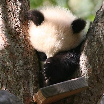 Baby Panda by petenbree