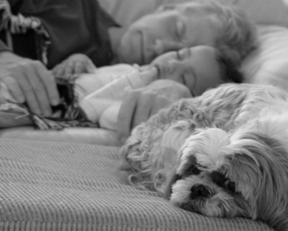 Watch dog? by lindaflood