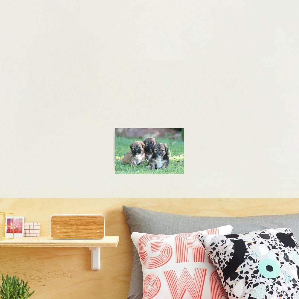 Three times cute Photographic Print