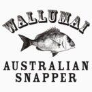 Wallumai (Snapper) by Yvette Bell
