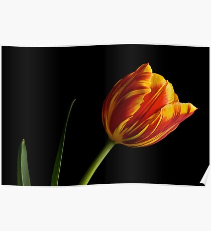 Kees Nelis Tulip Poster