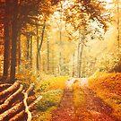 « Autumn Lights » par Philippe Sainte-Laudy