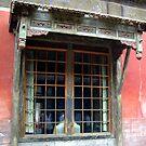 """Window in the Forbidden City. "".: by lurline"