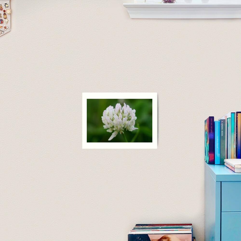 Red Clover Flower Art Print