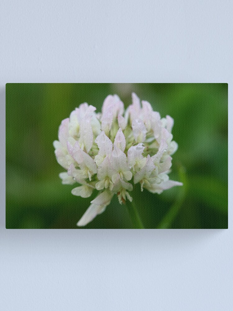 Alternate view of Red Clover Flower Canvas Print