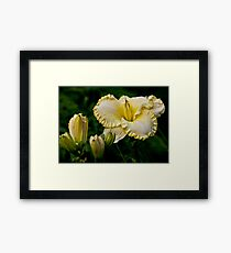 """First Knight"" Daylily Framed Print"