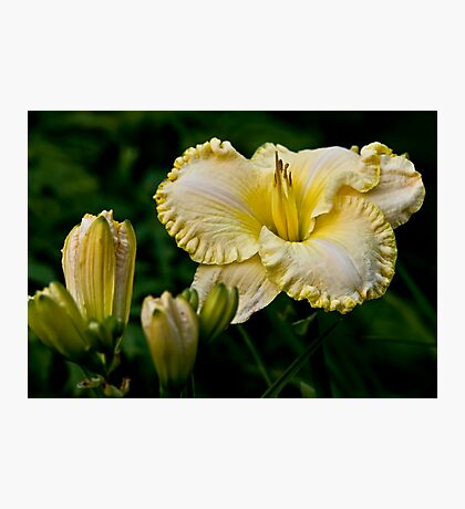 """First Knight"" Daylily Photographic Print"