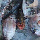 talking fish by rita flanagan
