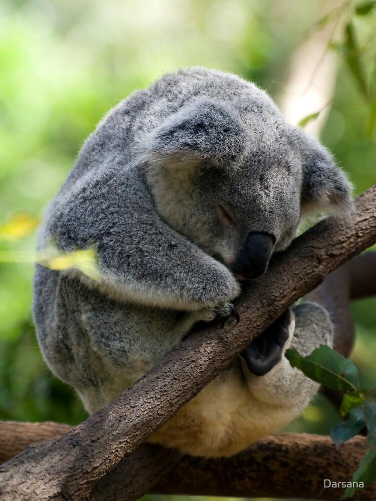 Sleeping Koala by Tony Steinberg