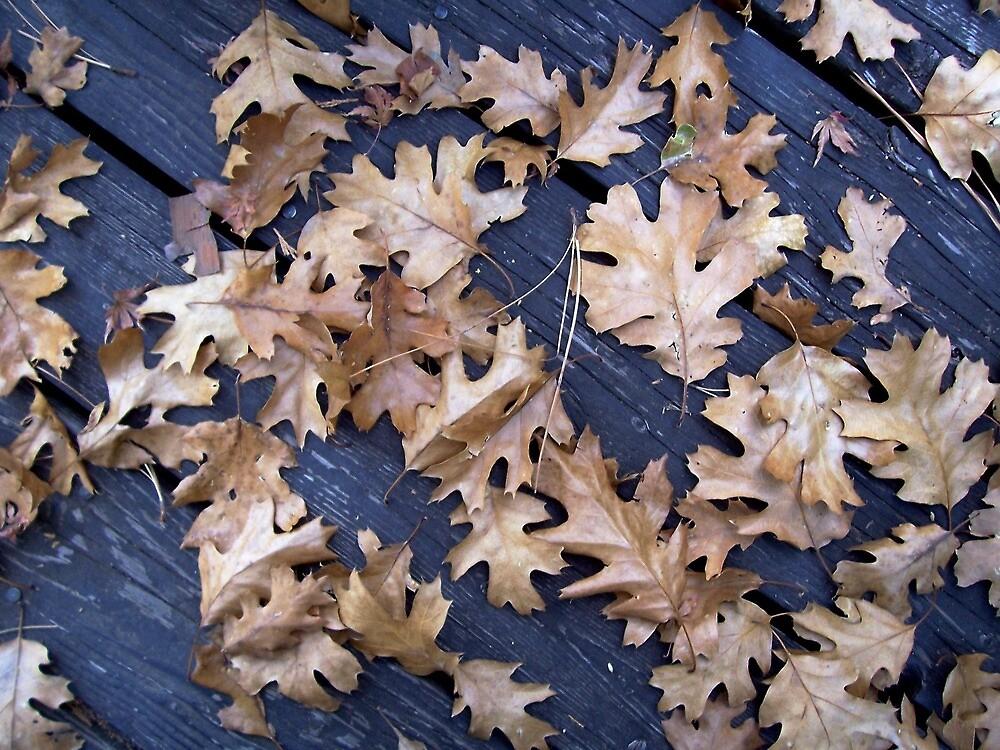 Oak Leaves in Autumn by Douglas E.  Welch