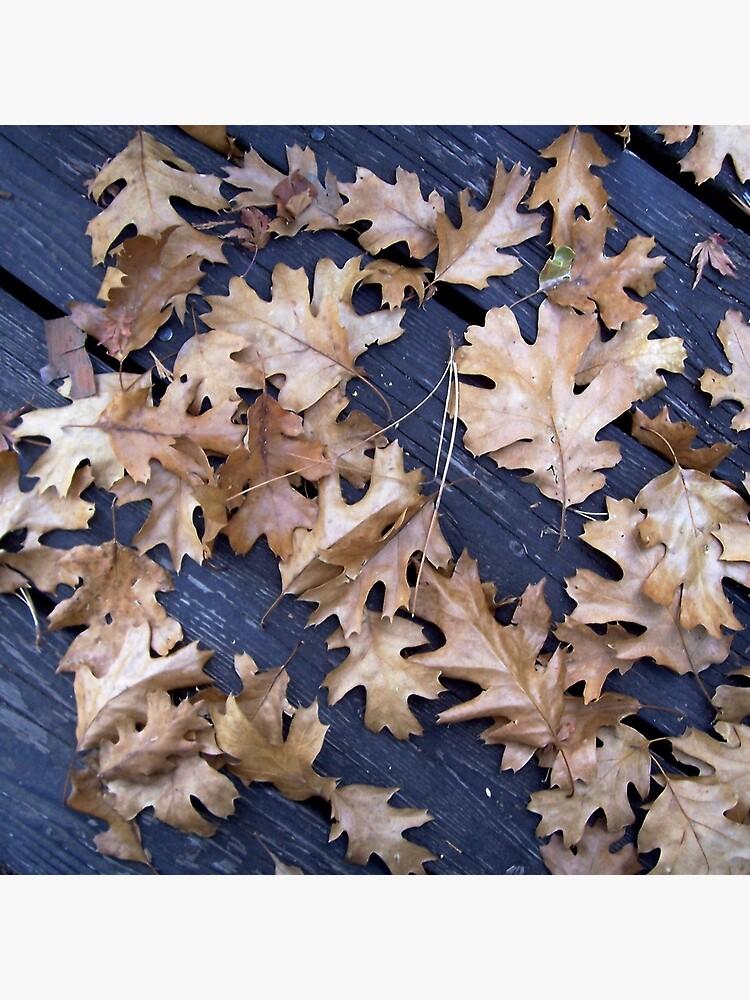 Oak Leaves in Autumn by douglasewelch