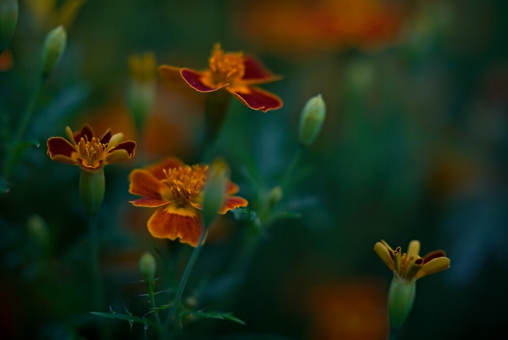 Untitled by Gary Tumilty
