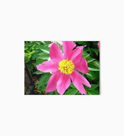 Pink flower Art Board
